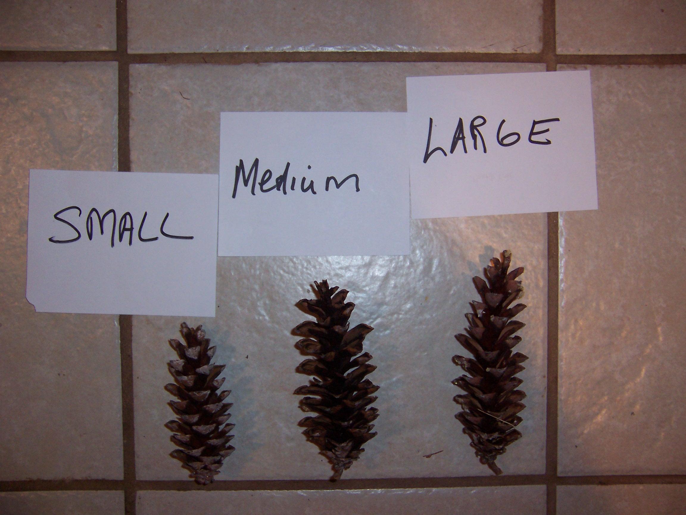 pinecones (2)