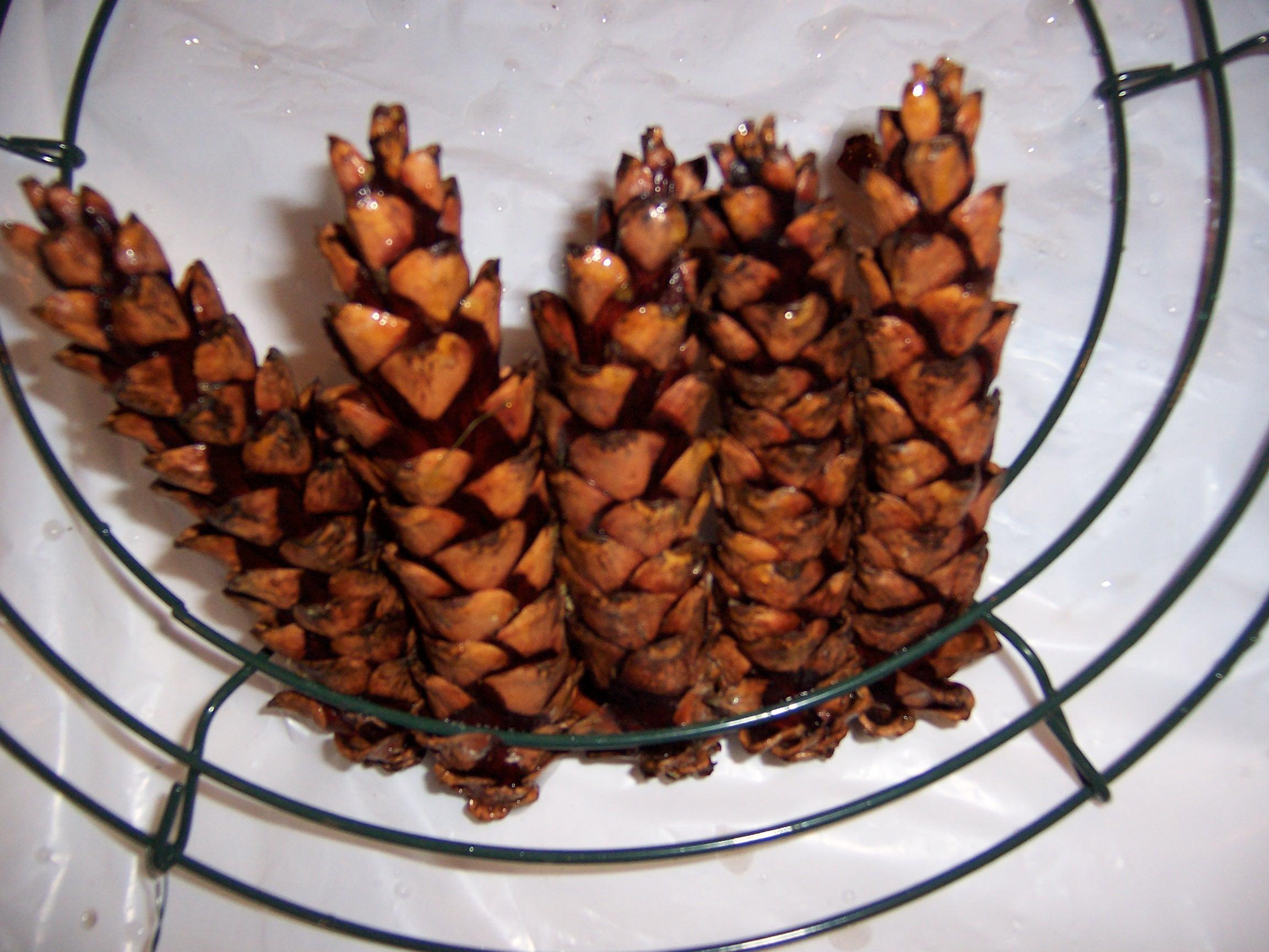 pinecones (13)